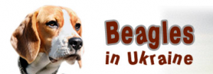 Ukrainian Beagles home
