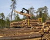 Деревообробні підприємства України