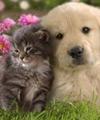 Домашні тварини | догляд в Україні